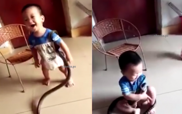 بالفيديو هرعت الأم على صراخ طفلها لتجد أفعى ضخمة تلتف حوله! ثم بقيت واقفة كالمتفرجة على ما يحدث!