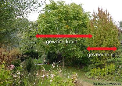 Smalle boom of struik voor kleine tuin