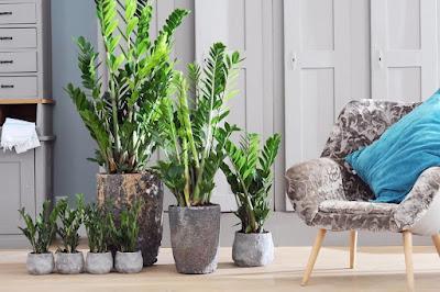 Como utilizar plantas na decoração de interiores