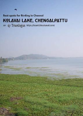Kolavai Lake Chengalpattu Birding in Chennai Pinterest