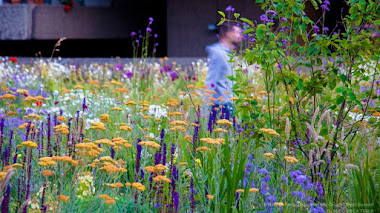 Naturalistic Planting Design de Nigel Dunnett. El diseño de plantación como una forma de arte
