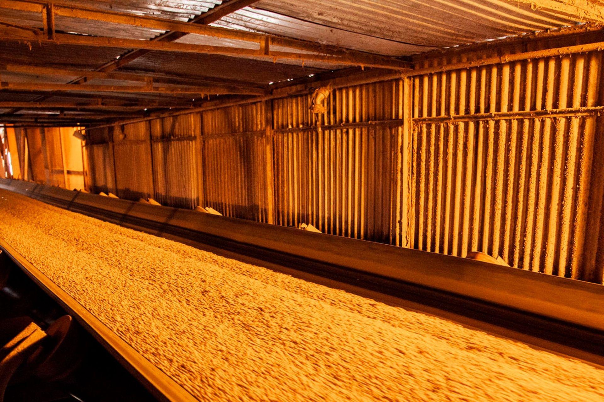 Porto de Paranaguá tem alta nos prêmios de exportação da soja para 2022
