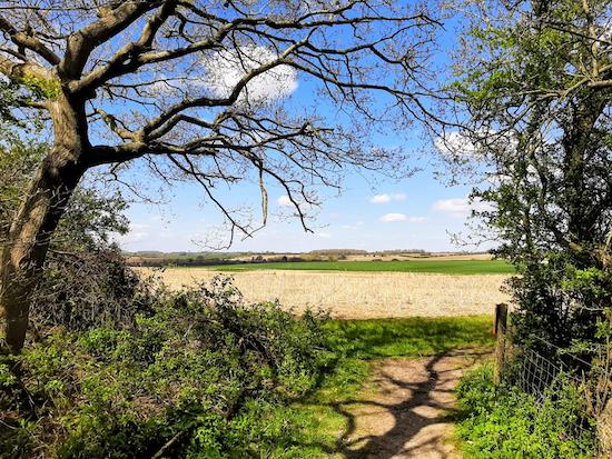 Walk 134: Ferneux Pelham W Loop