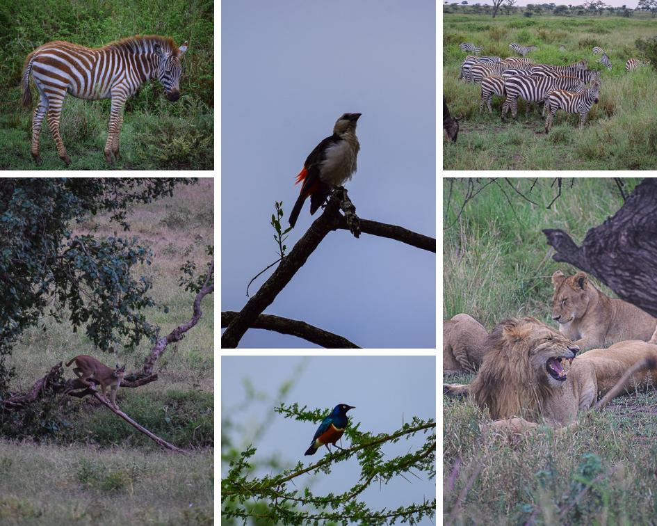 Safari at the Serengeti National Park