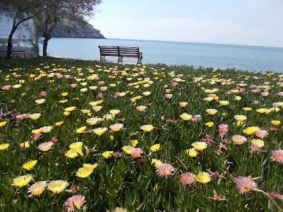 Ομορφη εικόνα με λουλούδια πολύχρωμα και δίπλα η θάλασσα απο το νησί Λήμνος