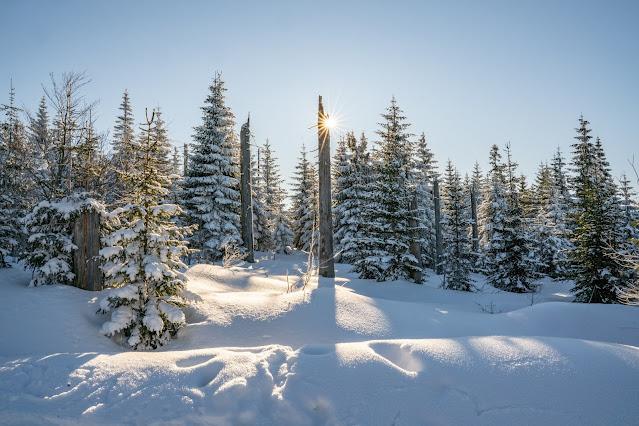 Wanderung auf den Lusen  Winterwandern im Nationalpark Bayerischer Wald 08