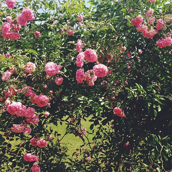 {take me away | TRAVEL DIARY : paris by instagram}