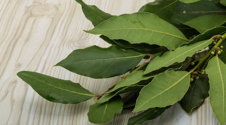 Лавровый лист - мощное средство от отеков и болей в суставах + целебные рецепты