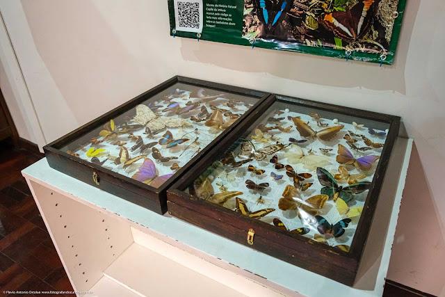 Museu de História Natural Capão da Imbuia - MHNCI - caixa com borboletas