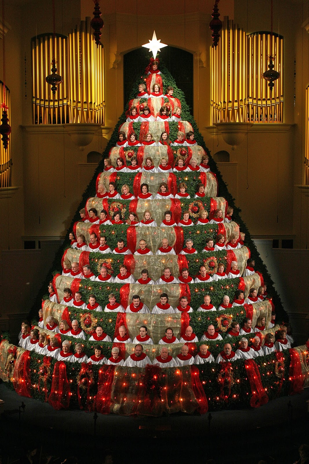 Best Living Christmas Tree Photos