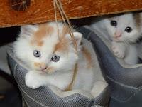 Pahami Alasan Penting Kenapa Kucing Hobi Mencakar