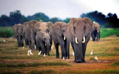 Top 10 Elephant Wallpaper HD Background