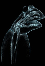 Funny Kermit X-Ray