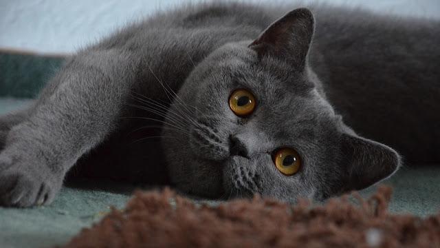 Crean una puerta con inteligencia artificial que impide que su gato traiga animales muertos a casa