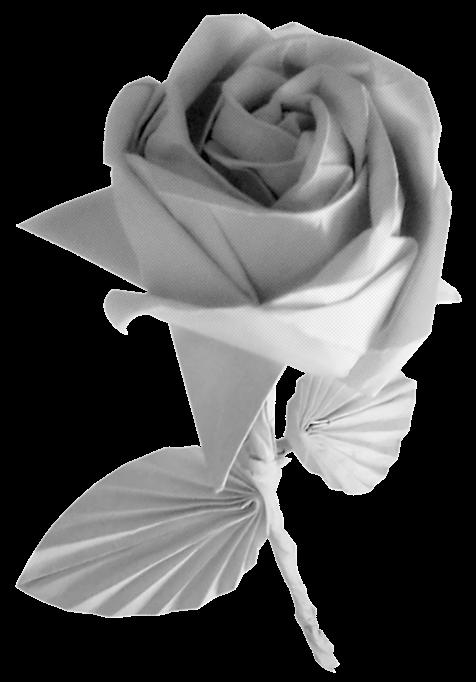 White Rose Origami