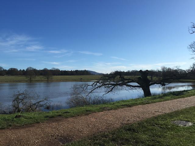 River Tern Attingham Park