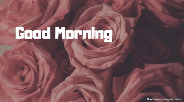 Good Morning Images In Roses 18