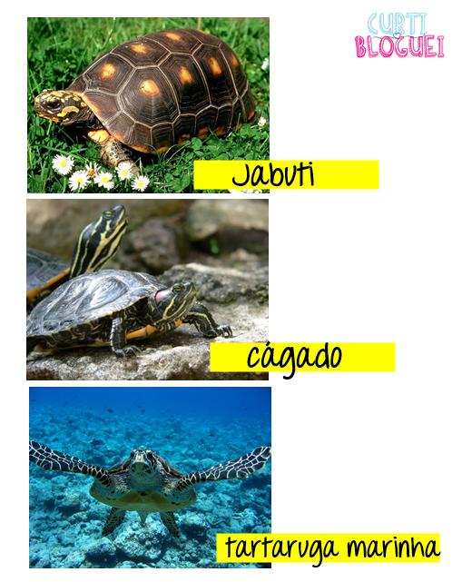 Cágado, tartaruga marinha e jabuti