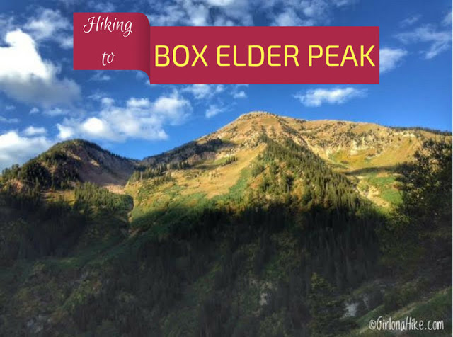The Top 10 Hikes in American Fork Canyon, American fork canyon best hikes and trails, best views in American fork canyon, Box Elder Peak