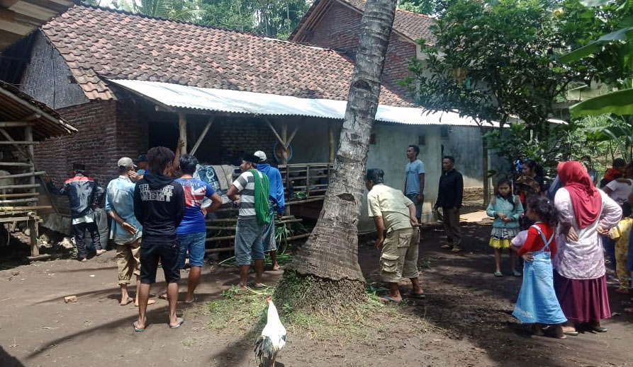 Diduga Penadah Sapi Curian, HL Warga Desa Tunjung Dicari Polisi