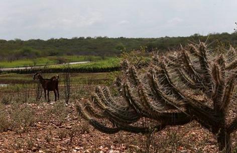 Nordeste enfrenta maior seca em 100 anos