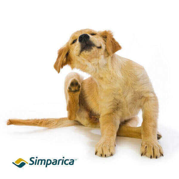 simparica for dogs