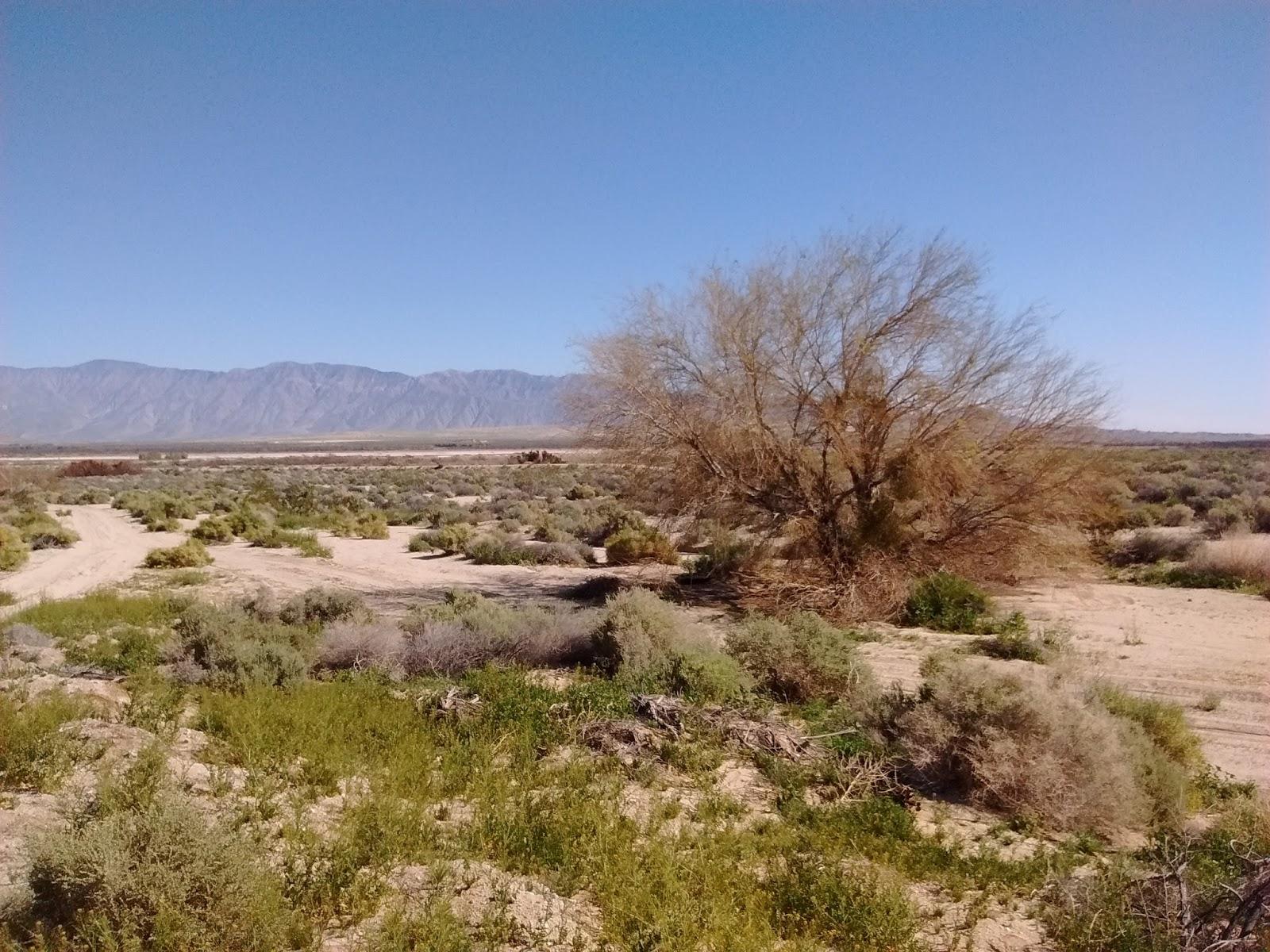 Trip report birds of borrego springs march 12 2017 greg in san desert near borrego springs mightylinksfo