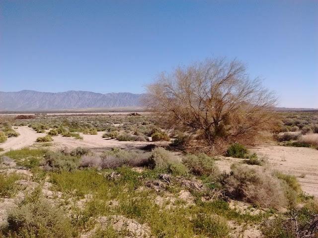 desert near Borrego Springs