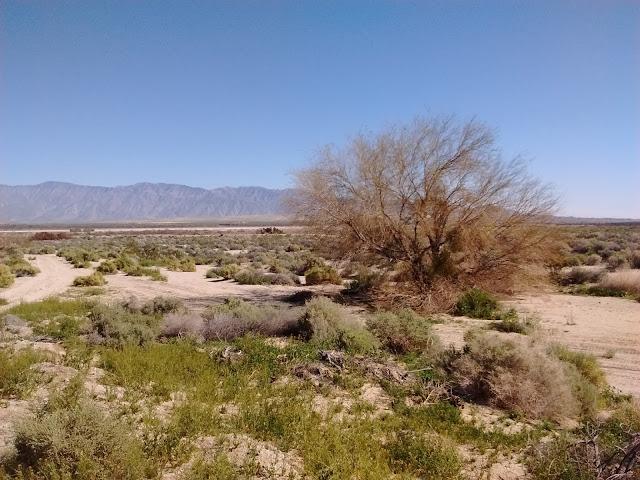 desert near Borrego Springs