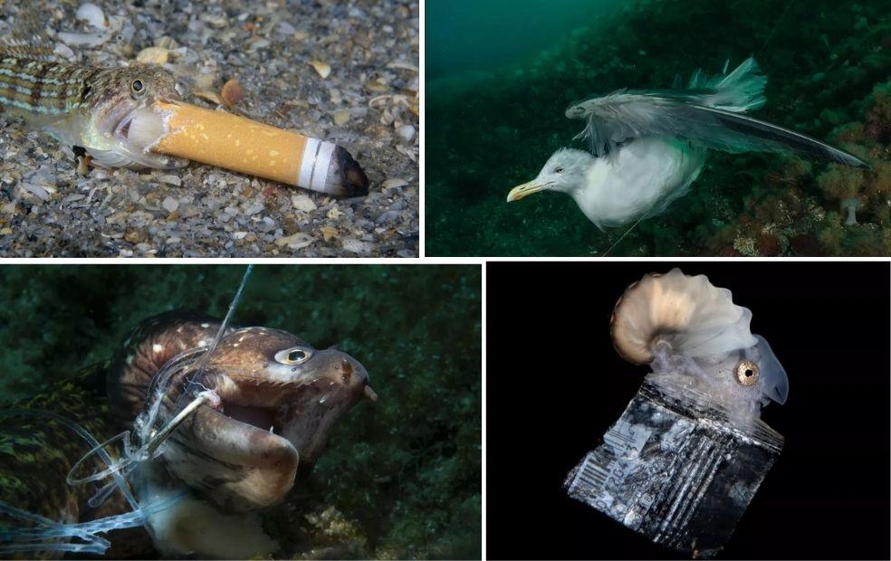 Prêmio de fotografia retrata o dano causado pelo lixo na vida marinha