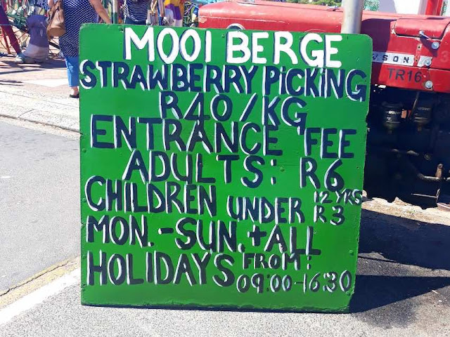 The Mooiberge Strawberry Farm: Opening hours and prices
