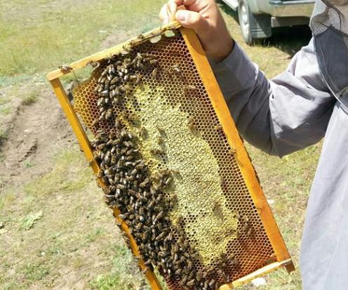 Κάτι πάει να κάνει ο έλατος: Όταν οι μελισσοκόμοι μιλούν...