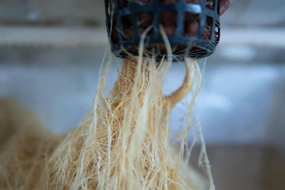 tips-menanam-hidroponik-di-rumah