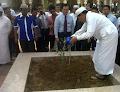 Harga dan Jenis Pohon Zaitun dan Cara Menanamnya di Daerah Indonesia