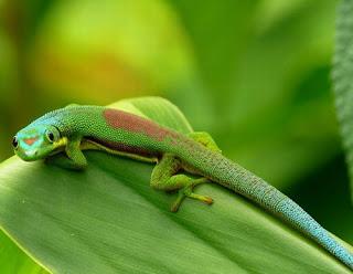 animales y fauna de la isla madagascar