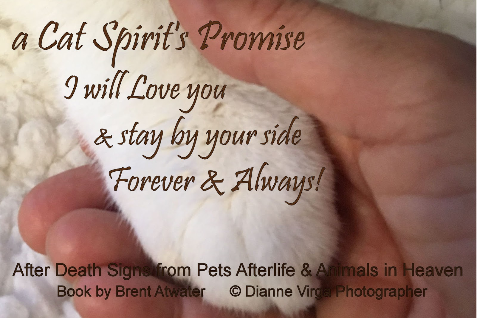 Cat Spirit\'s Promise- E26 - Inspirational Pet Loss Quotes ...