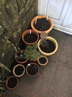gardening, herbs, pig row