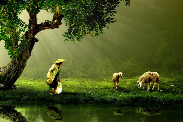 Woman and Sheep Beside Body of Water HD Wallpaper