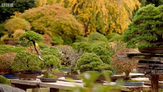 Bonsai-mura, a Bonsai Village
