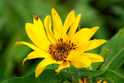 yellow flower nature photo
