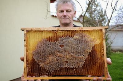 Magyarország-térképet mézeltek a méhek