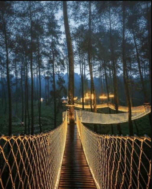 Indonésia Floresta