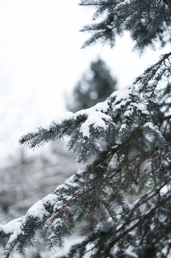 Blog + Fotografie by it's me! - Draussen - Frau Frieda sucht Schnee, verschneite Tannenzweige