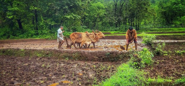 Kisan divas 2020   चौधरी चरणसिंह जी की पुण्यतिथि पर मनाया जाएगा देश भर में किसान दिवस।kisan mela 2020