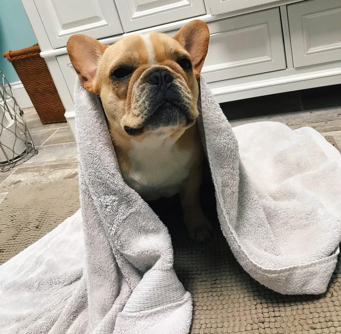 comment donner un bain à votre chien