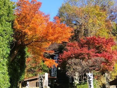 杉本寺の紅葉
