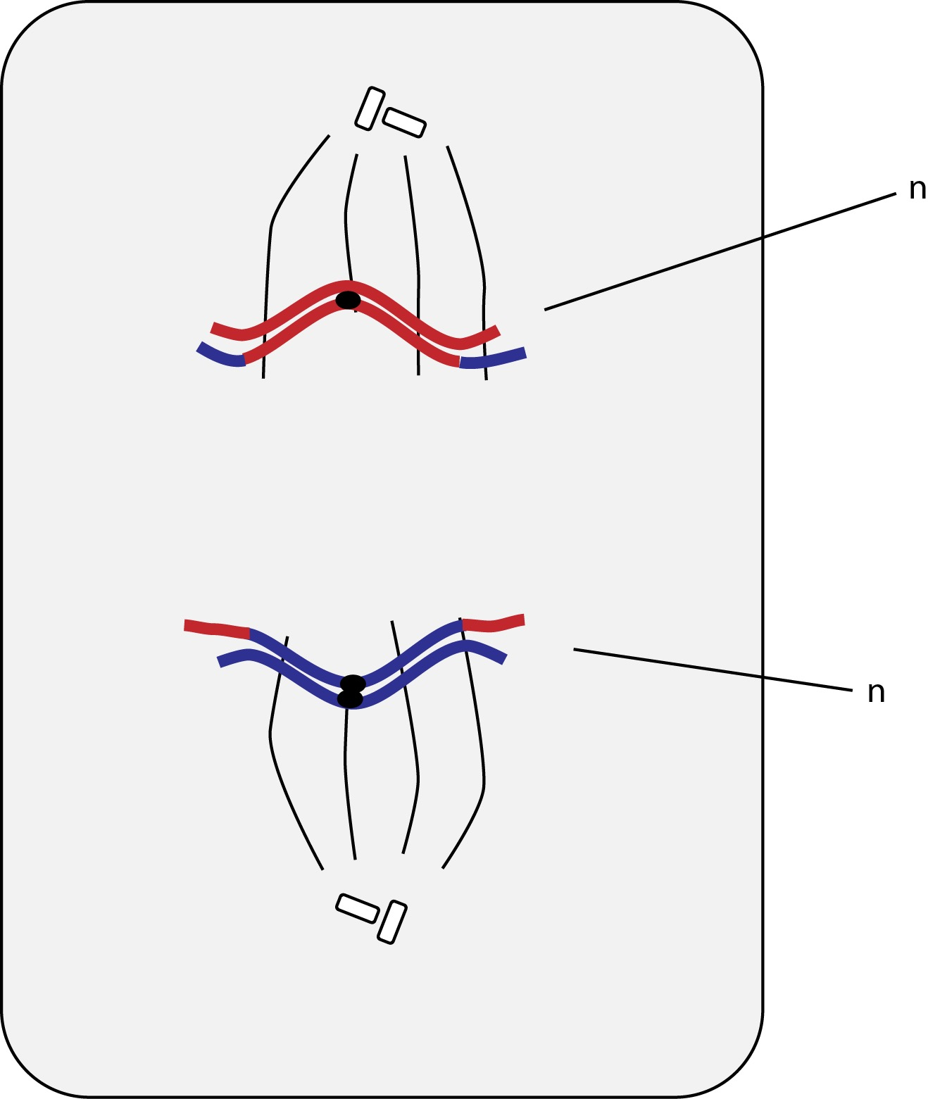 El Moderno Prometeo Cell Anatomy