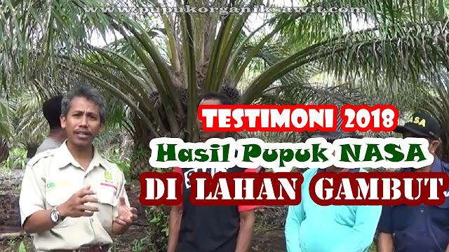 Beli pupuk sawit Nasa hub. 0813 9262 6947 / 0815 797 3551. Testimoni budidaya kelapa sawit lahan gambut Kalimantan.