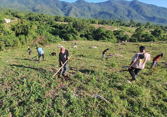 Ninh Thuận tranh thủ 'thời gian vàng' mùa mưa để hoàn thành mục tiêu trồng rừng