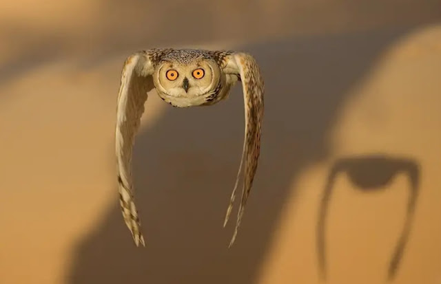 Animals, Mammals, Birds, Eagle-Owl,